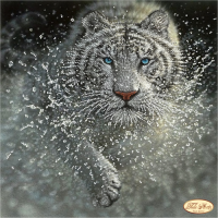 Bead Art Kit - Swift Tiger