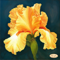 Bead Art Kit - Golden Iris
