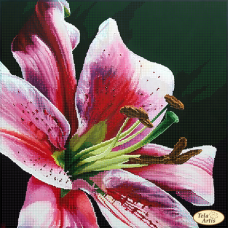 Bead Art Kit - Royal Lily